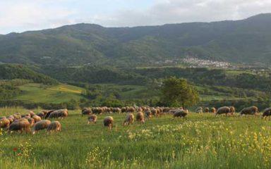 Ανακοίνωση για την 3η πληρωμή των δικαιούχων του προγράμματος του ΥΑΑ&Τ «Βιολογικής Κτηνοτροφίας»