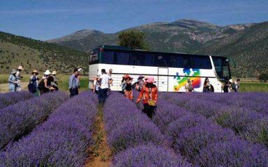Συνεχώς αναπτυσσόμενος ο κλάδος των αρωματικών φυτών στο Νομό Κοζάνης!
