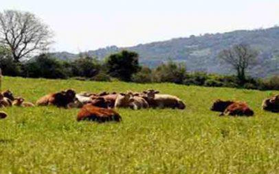 Πιστώθηκαν οι λογαριασμοί των δικαιούχων πληρωμής των ενστάσεων της δράσης 1.2«Βιολογική Κτηνοτροφία»