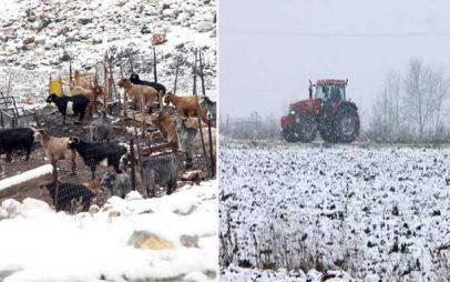 Δυτική Μακεδονία: Ανησυχία για καταστροφές σε φυτική και ζωική παραγωγή εκφράζουν αγρότες και κτηνοτρόφοι
