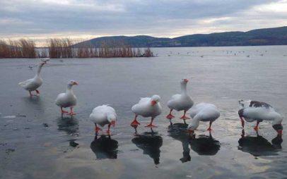 Η πανέμορφη φωτογραφία της Ημέρας από την παγωμένη λίμνη της Καστοριάς!