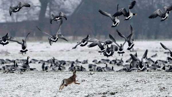 Καθολική  απαγόρευση του κυνηγιού σε όλη την Επικράτεια επιβάλλουν οι δυσμενείς καιρικές συνθήκες