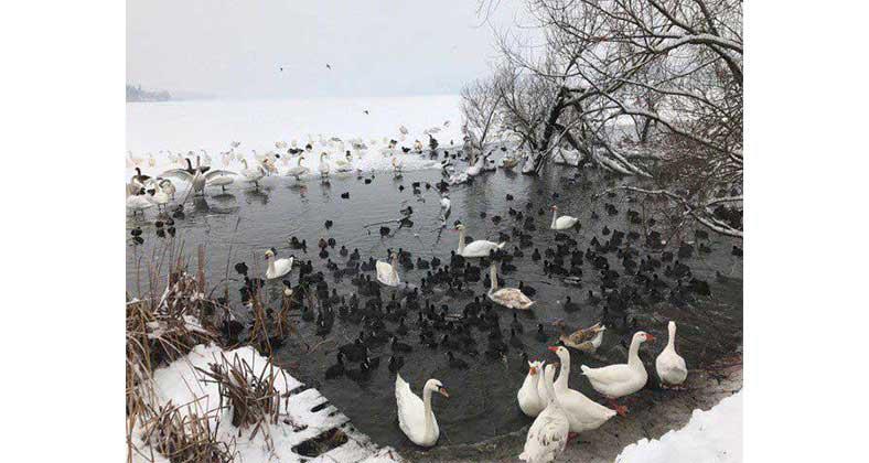 Η όμορφη φωτογραφία της ημέρας από την παγωμένη λίμνη της Καστοριάς!