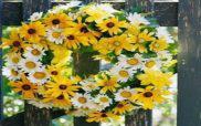 Ένας χρόνος μετά το θάνατο του Στάθη από τα ροτβάιλερ στην Κοζάνη