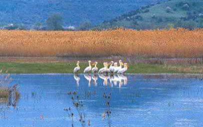 Ημερήσια απόδραση του συλλόγου στις λίμνες των Πρεσπών