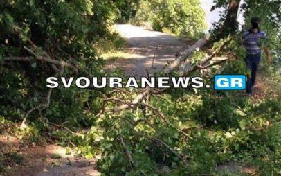 Έπεσε δέντρο στο γύρο της λίμνης στην Καστοριά