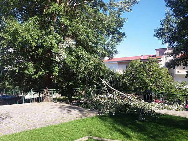 Ο αέρας έσπασε  κλαδί δέντρου στο παρκάκι απέναντι από τον Άγιο Γεώργιο