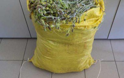 Συνελήφθη αλλοδαπός σε περιοχή της Φλώρινας γιατί μάζεψε 14 κιλά τσάι του βουνού