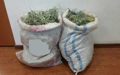 Πρέσπες: Δύο συλλήψεις Αλβανών υπηκόων γιατί μάζεψαν παράνομα 8 κιλά τσάι του βουνού