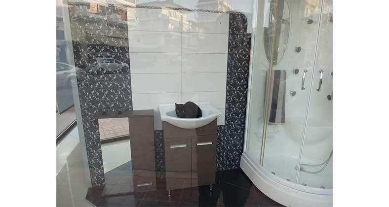 Η Φωτογραφία της Ημέρας με τον ανέμελο γάτο στη βιτρίνα: Μη του κόβετε το χουζούρι!