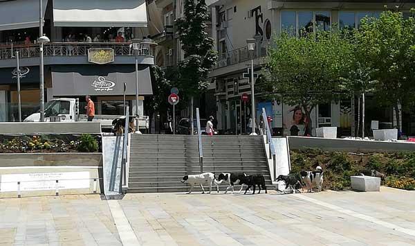 Ψάχνουν δροσιά και νερό τα αδέσποτα σκυλιά στην πλατεία της Κοζάνης