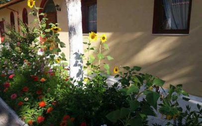 Πολύχρωμα λουλούδια στον Ιερό Ναό Αγίας Παρασκευής Κοζάνης
