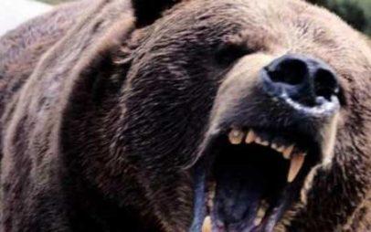 Αρκούδα επιτέθηκε και τραυμάτισε άνδρα στη Φλώρινα