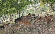 Παραμυθένιο σκηνικό στο πάρκο ελαφιών στον Άγιο Δημήτριο Ελλησπόντου Κοζάνης