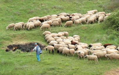 Π.Ε. Γρεβενών: Αναλυτικές καταστάσεις πληρωμής της «Βιολογικής Γεωργίας»