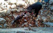 Πυροσβέστες έσωσαν αδέσποτο σκυλί που πέταξαν στη λίμνη της Καστοριάς