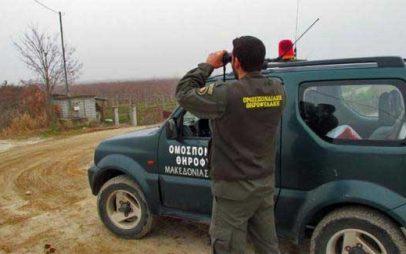 ΚΑΣΤΟΡΙΑ – Θηροφύλακες συνέλαβαν τέσσερα άτομα γιατί κυνηγούσαν παράνομα λαγούς!
