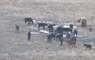 Άγρια άλογα προκαλούν ζημιές στην Ερμακιά