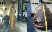Ψάρεψε τεράστιο γουλιανό στην Κοζάνη και κάλεσε φίλους απ' τον Έβρο να τον φάνε