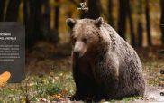 ΑΡΚΤΟΥΡΟΣ: Το «μυστήριο της μικρής αρκούδας» στα σχολεία της χώρας