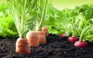 Τροποποίηση της με αριθ. 2848/145689/28-12-2016 απόφασης του Υπουργού και του Αναπληρωτή Υπουργού Αγροτικής Ανάπτυξης και Τροφίμων (ΦΕΚ Β΄ 4310/2016)