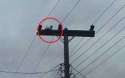 ΚΑΣΤΟΡΙΑ – «Γάτος-Ταρζάν» στην Οινόη, σκαρφάλωσε σε στύλο της ΔΕΗ (Φώτο)