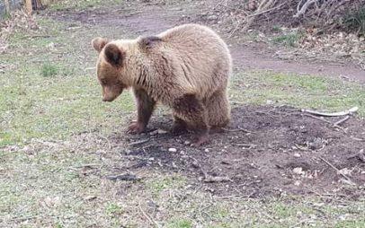 Ο Ρέι γλίτωσε την πώληση και βρήκε καταφύγιο στον Αρκτούρο