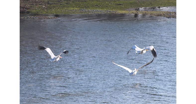Η Φωτογραφία της Ημέρας: Πανέμορφες εικόνες από τη λίμνη Πολυφύτου