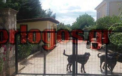 Δίκη άτυχου Στάθη:Υπάρχει τώρα σκυλί στην αυλή του ιδιοκτήτη των ροτβάιλερ