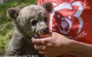 Ένα ορφανό αρκουδάκι, τον Λουίτζι, θα φροντίσει ο ΑΡΚΤΟΥΡΟΣ (video- φωτο)