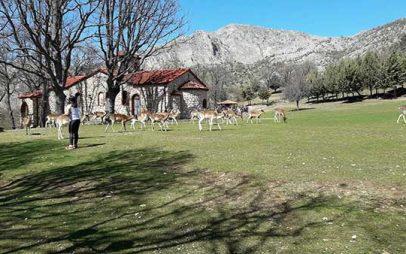 Αυξήθηκε ο αριθμός των ελαφιών στο πάρκο του Αγίου Παντελεήμονα