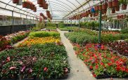 Πάρτε τα κλαδευτήρια σας! Προτάσεις για άνθη και φυτά που θα φυτέψετε την άνοιξη!