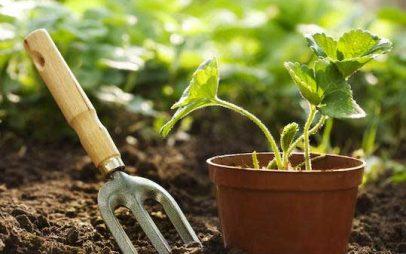 Συμβουλές για την καλλιέργεια ενός λαχανόκηπου