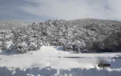 Χιόνια και στην πόλη της Κοζάνης -Ολικός παγετός για πέντε μέρες -Ίσως να δούμε μια άσπρη μέρα