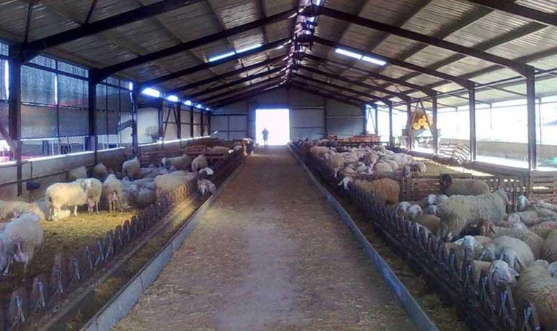 ΥΠΑΑΤ: Σε δημόσια διαβούλευση το νομοσχέδιο για τις κτηνοτροφικές εγκαταστάσεις