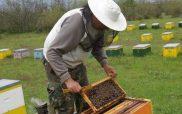 Αιτήσεις Δράσης 3.1 ««Εξοπλισμός για τη διευκόλυνση των μετακινήσεων (Αντικατάσταση κυψελών)» – Αιτήσεις Δράσης 3.2 «Οικονομική στήριξη της νομαδικής μελισσοκομίας» , εαρινή-θερινή περίοδος 2021