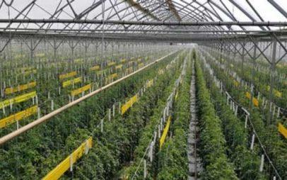 Πτολεμαΐδα: Θερμοκήπιο, για παραγωγή λουλουδιών και φυτών, προτείνει ο Σύλλογος γονέων Α.με.Α