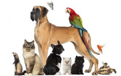 Πρόστιμα 300 ευρώ -700 ευρώ σε δημότες της Κοζάνης για τις υποχρεώσεις τους στα ζώα συντροφιάς