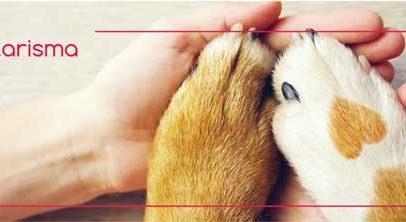Σε λειτουργία η ιστοσελίδα του Δημοτικού Καταφυγίου αδέσποτων ζώων Εορδαίας