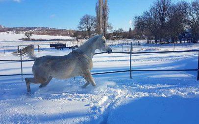 Φωτογραφία ημέρας: Αραβικό άλογο «αλωνίζει» τα χιόνια στο Μικρόβαλτο…