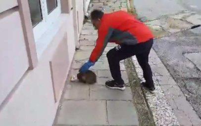 Έσωσε γάτα που παγιδεύτηκε σε κονσέρβα στην Καστοριά (Βίντεο)
