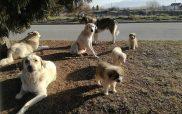Ο Λάζαρος Μαλούτας για την ανευθυνότητα των πολιτών που εγκαταλείπουν τα ζώα – Αντίθετος ο Βασιλακόπουλος στη συμμετοχή των φιλοζωικών στην αυτοδιοίκηση
