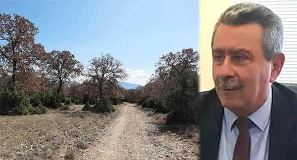 Γιατί κ. Μιχελάκη δεν ανακαλείτε την απόφαση δασολογίου για να σωθεί το δάσος τη Μεσιανής;