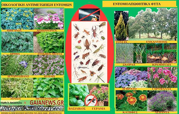 Οικολογική αντιμετώπιση εντόμων εντομοαπωθητικά φυτά Α