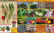 Κουμαριά – Λαγόμηλα – Αγριοκουμαριά – Arbutus Unedo L.