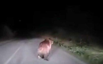 Καστοριά: Απρόσμενη συνάντηση με αρκούδα (βίντεο)