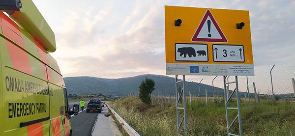 Τροχαίο ατύχημα με θύμα νεαρή ενήλικη αρκούδα