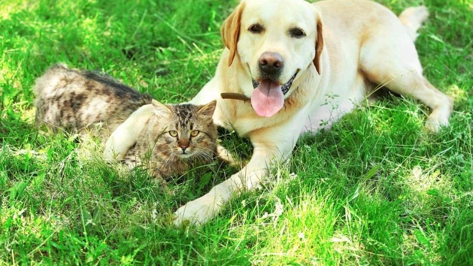 Καύσωνας: Δέκα top tips για να δροσίσετε τον σκύλο και την γάτα