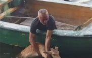 Καστοριά: Ελάφι το έσκασε από τον Προφήτη Ηλία και βρέθηκε στη λίμνη – Επιχείρηση διάσωσης