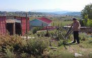 Γρεβενά: Επιδρομή αρκούδας και αρπαγή προβάτου από την αυλή μονοκατοικίας
